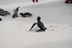turtles by arjandijksma